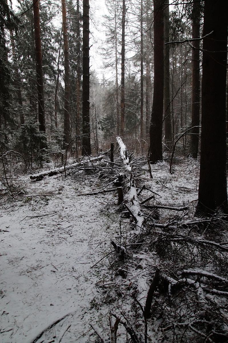 Нахабино, Подмосковье, зима 2015
