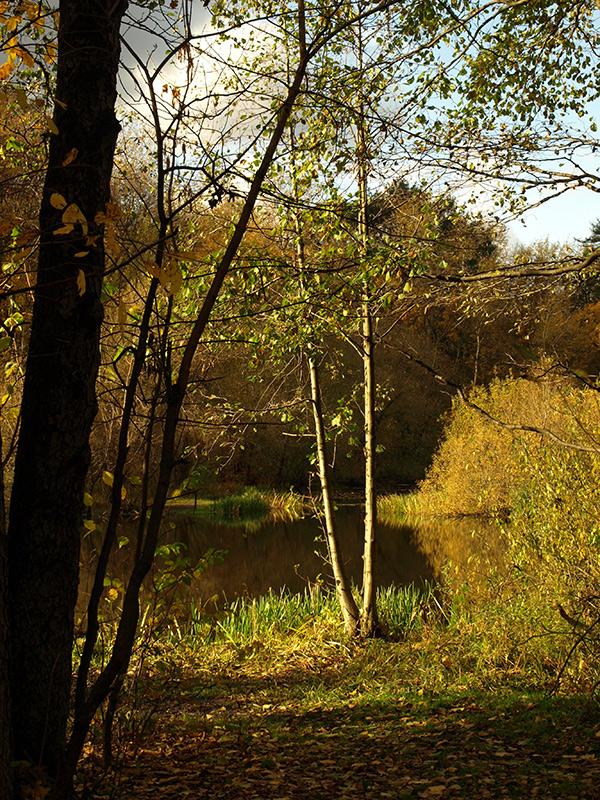 Длинные тени осени...  Москва, Покровское-Стрешнево, осень 2012
