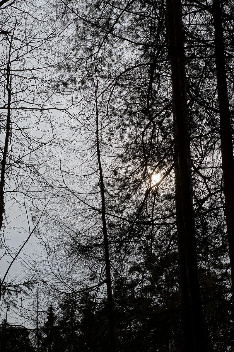 Нахабино, Подмосковье, весна 2017