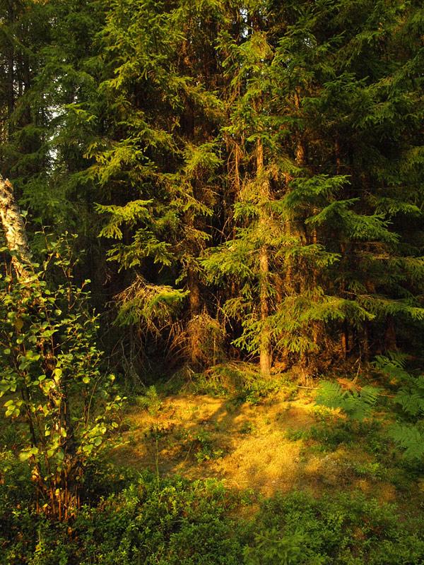 В солнечном луче.  Черноголовка, лето 2010