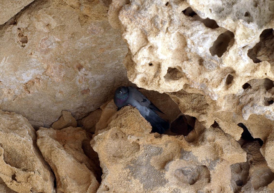 Голубиное гнездо.  Пафос, Кипр, осень 2014