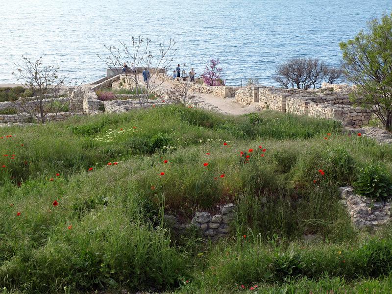 Вспышки маков... Херсонес, Крым, весна 2010