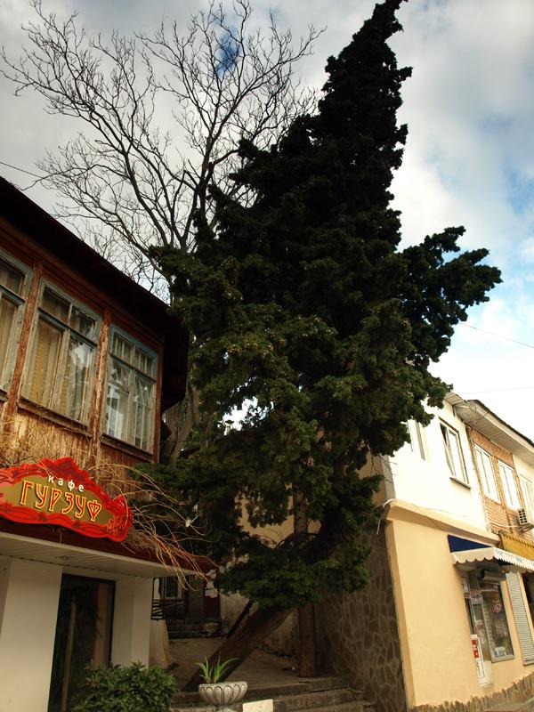 Двухэтажные дома и деревья.  Гурзуф, Крым, зима 2011