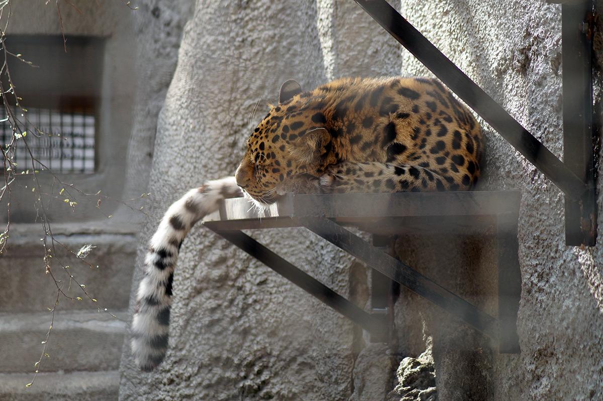 Зоопарк, Москва, весна 2016