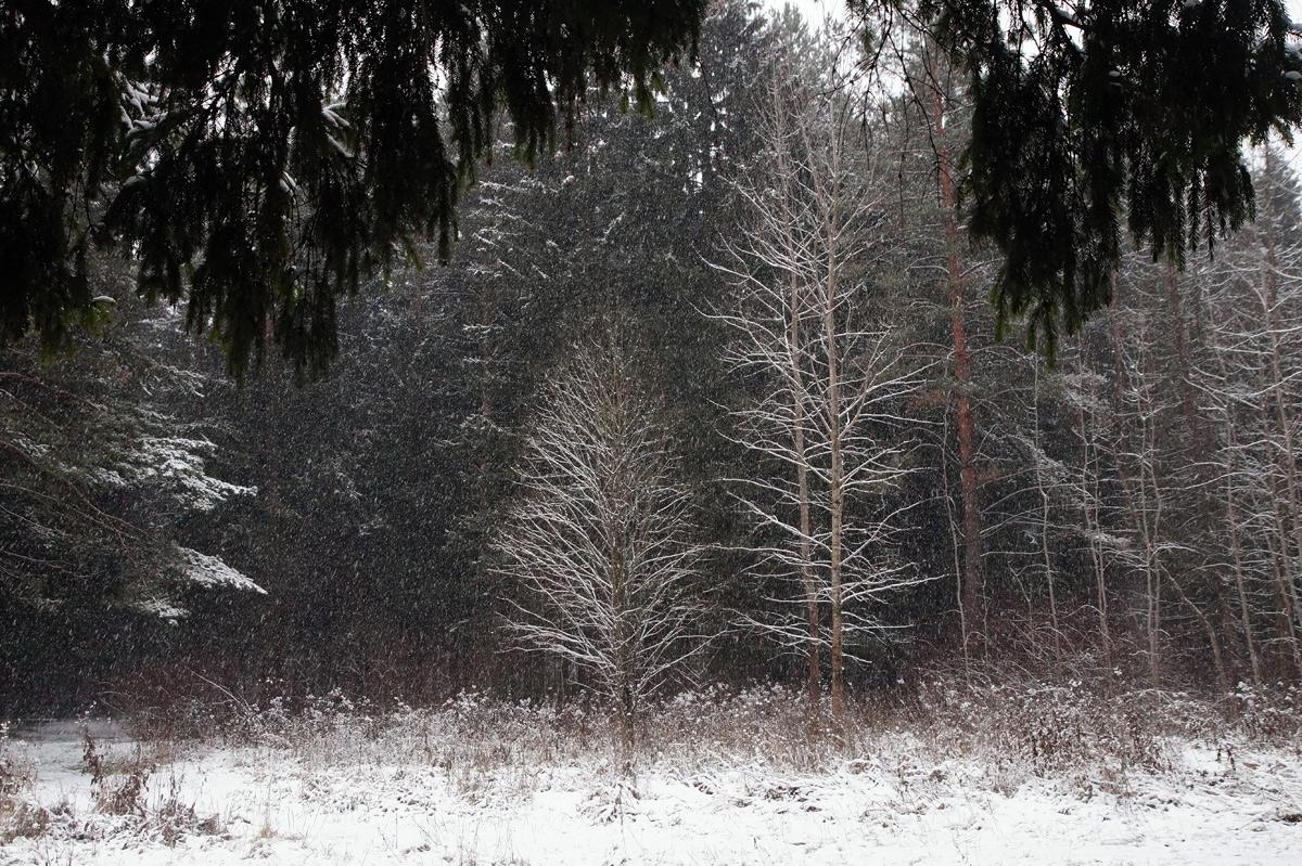 Нахабино, Подмосковье, зима 2020