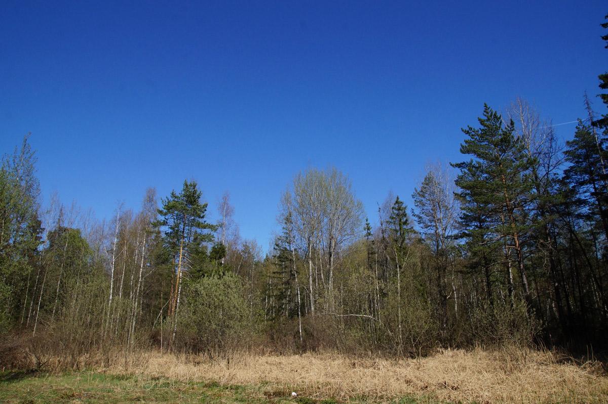 Бездонная синева весеннего неба.  Нахабино, Подмосковье, весна 2019