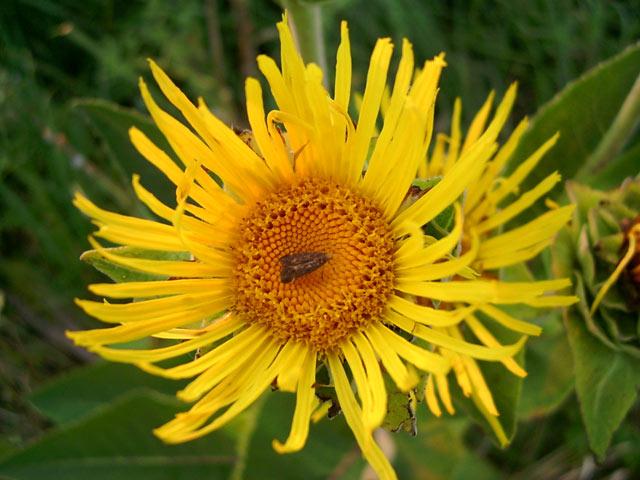 Кусочек солнца Семигорье, лето 2006