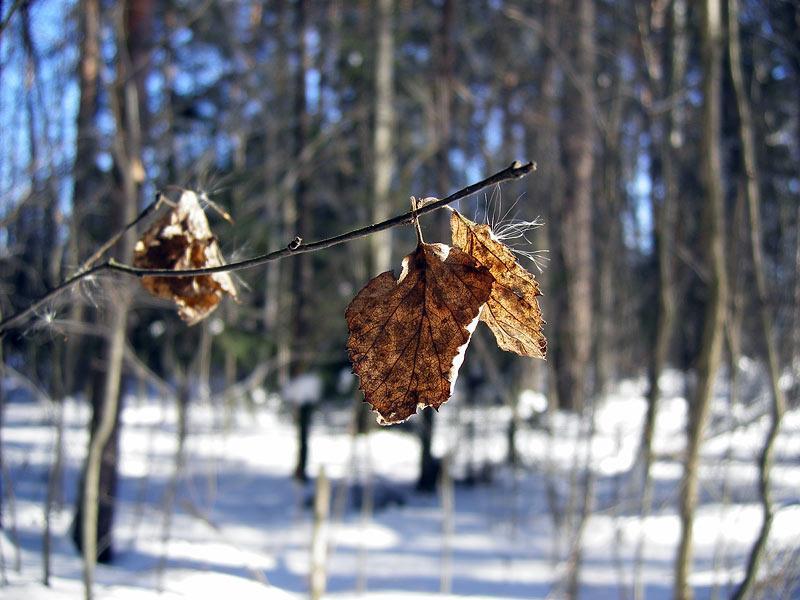 Жухлая желтизна Нахабино, зима 2007