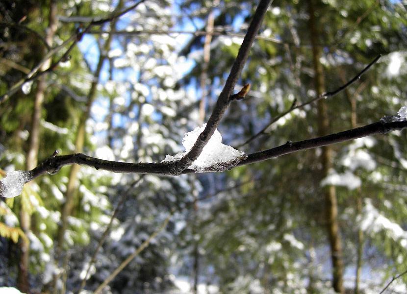 Тает... Нахабино, зима 2008