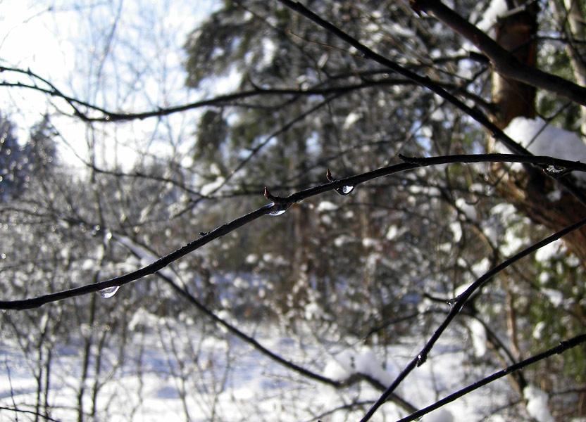 Бриллиантовые капли. Нахабино, зима 2008