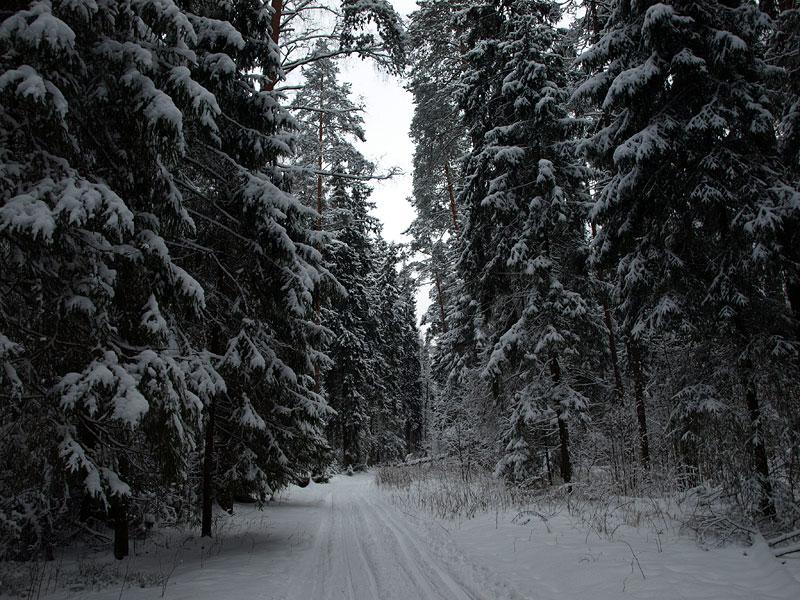 Лесная лыжня Черноголовка, зима 2009