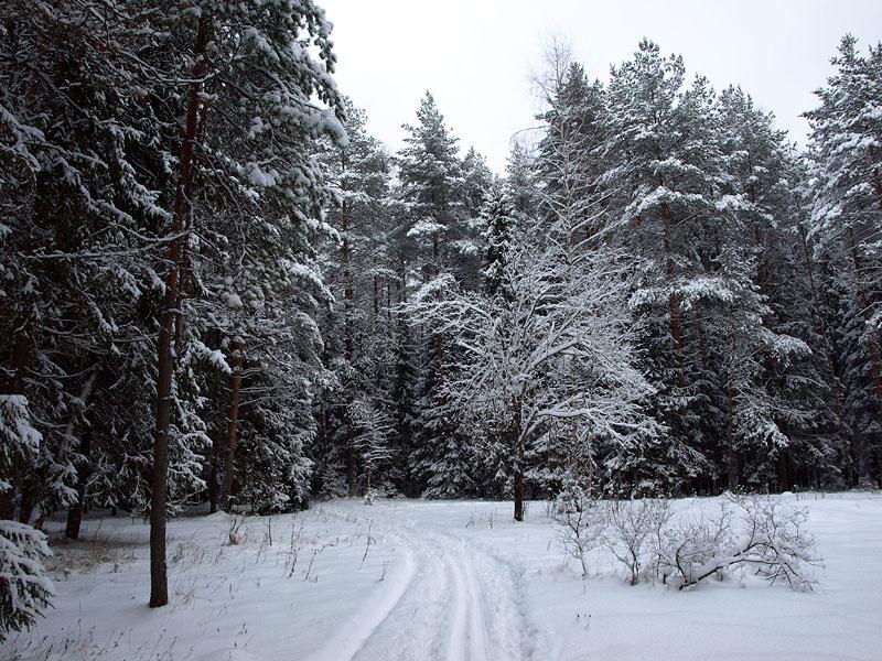На белой поляне... Черноголовка, зима 2009