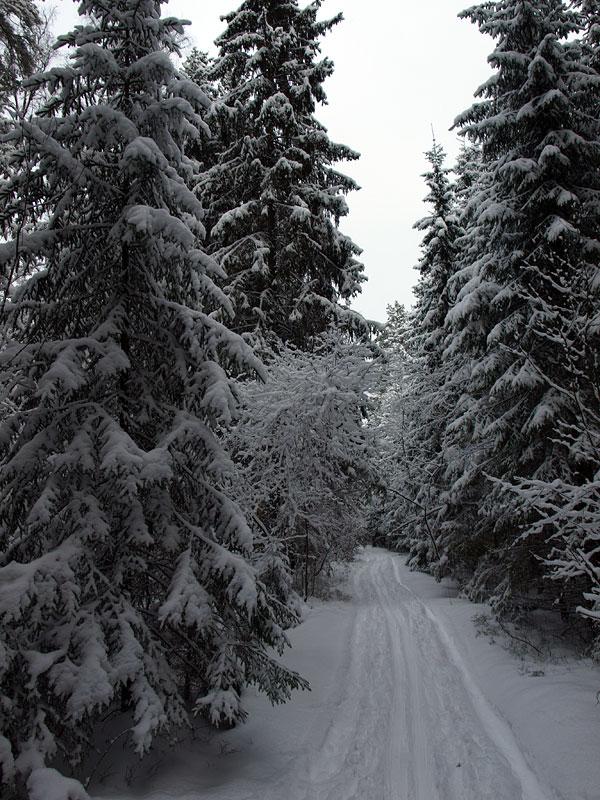 В коридорах дворца зимы... Черноголовка, зима 2009