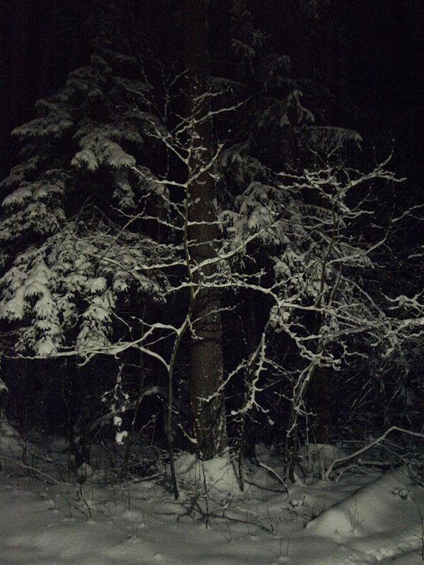 Так бы выглядел Твин Пикс в наших краях... Черноголовка, зима 2009