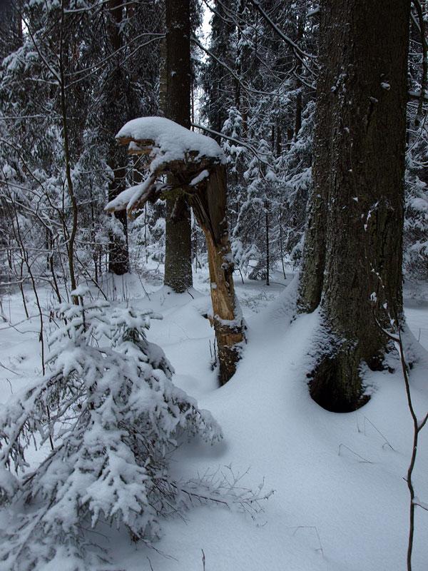 Леший:) Черноголовка, зима 2009