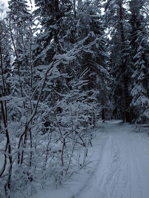 Хрупкая и невесомая красота... Черноголовка, зима 2009