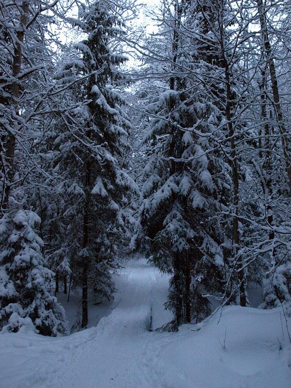 Мостик между елок. Черноголовка, зима 2009