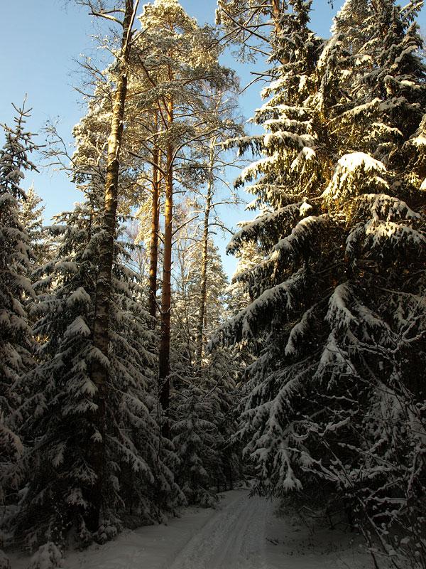 Путь в зимнее царство. Черноголовка, зима 2009
