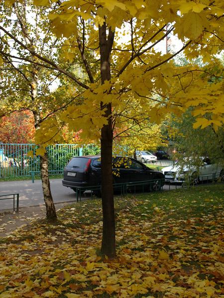 Задумчивая осень Москва, осень 2008