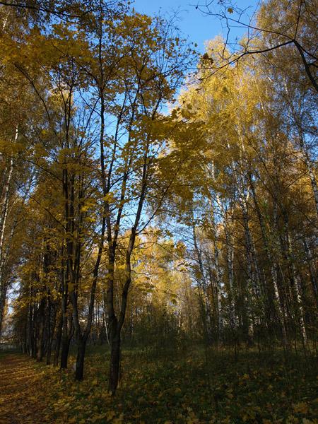 Бездонное небо за рябью осенних красок Нахабино, осень 2008