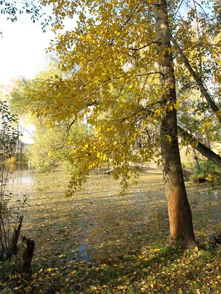 Орнамент листьев... Нахабино, осень 2008