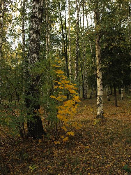 Зеленое и золотое. Нахабино, осень 2009