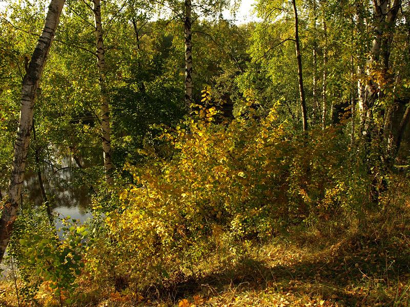 Осенняя пестрота Нахабино, осень 2009