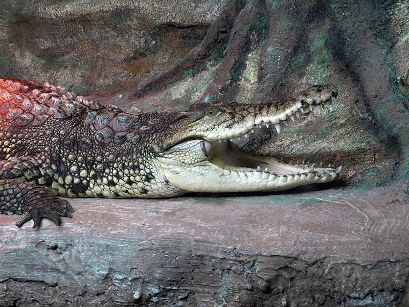 """""""По улице ходила большая крокодила"""":) Алушта, Крым, весна 2009"""