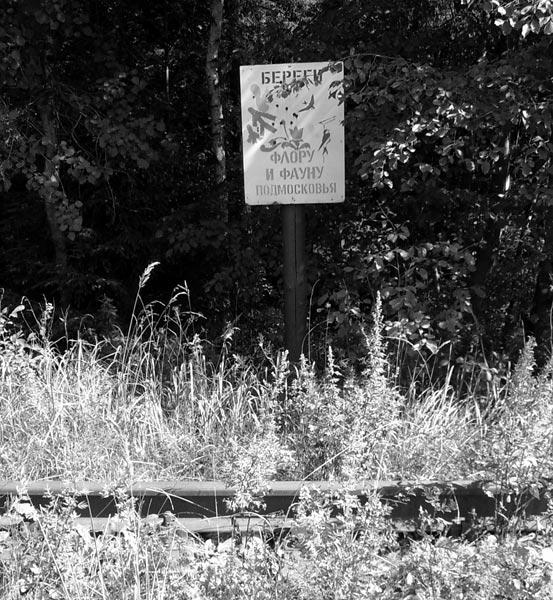 Наступление природы Нахабино, лето 2006