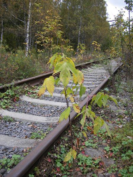 Краски и упадок Нахабино, осень 2006