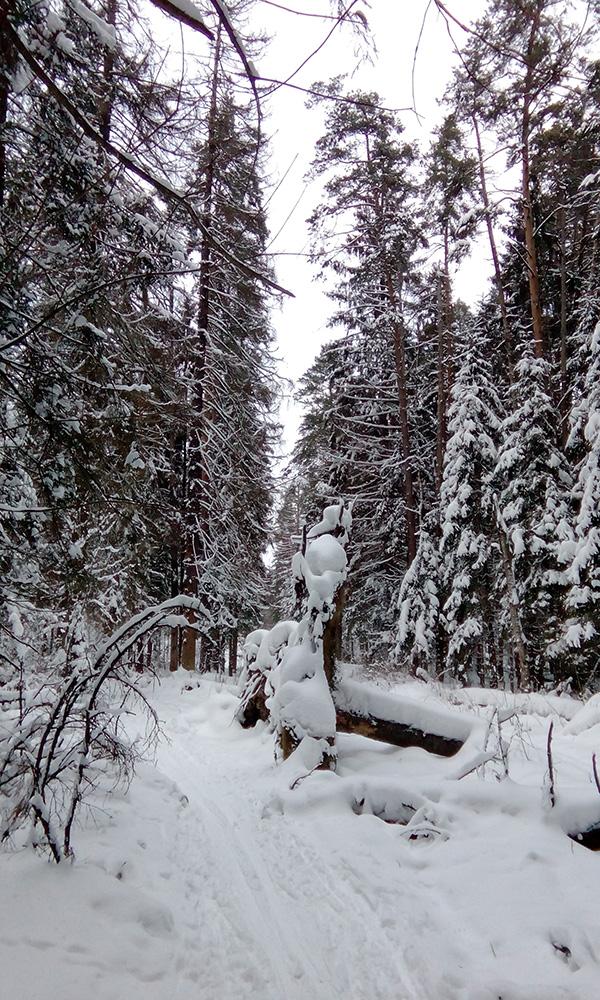 Нахабино, Подмосковье, зима 2016