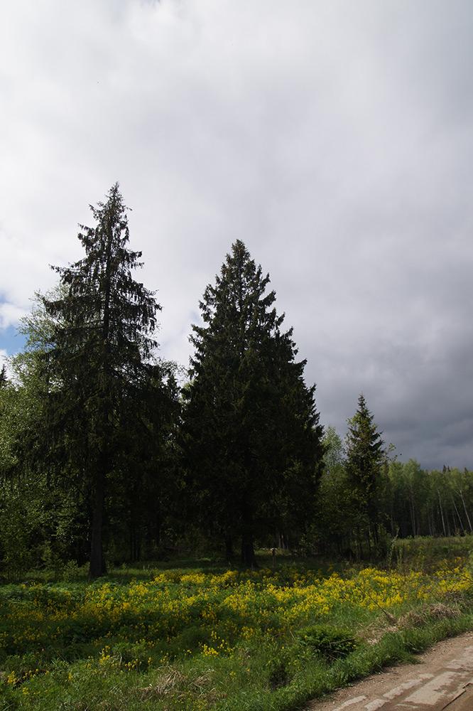 Ядрошино, Подмосковье, весна 2015