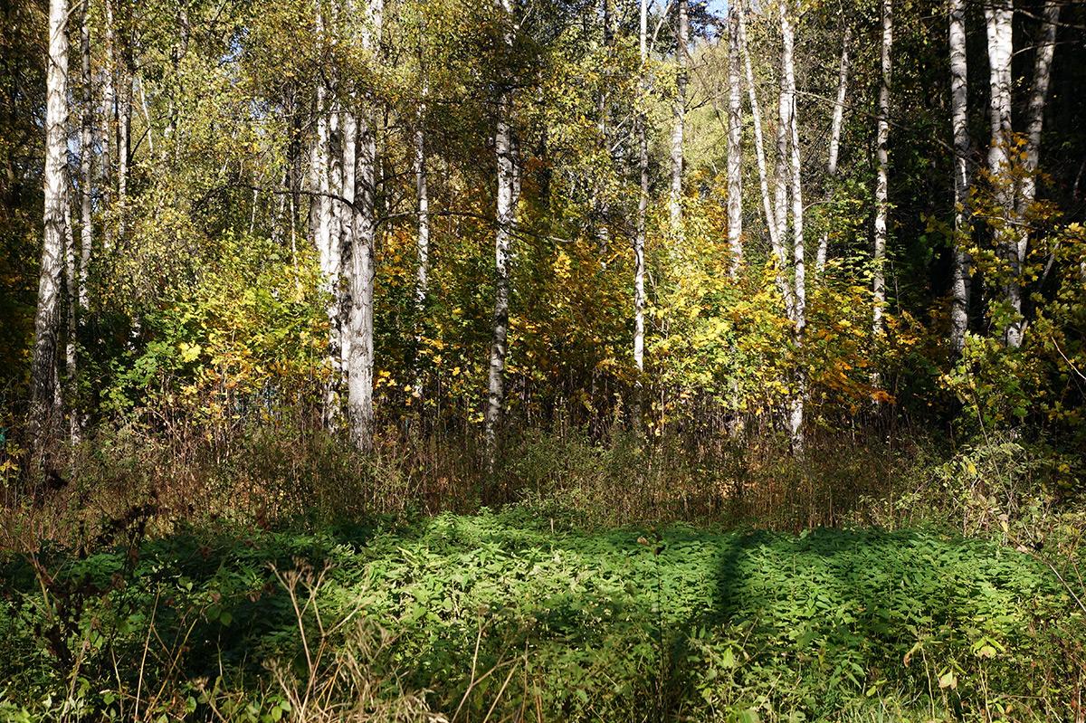 Подмосковье, осень 2015
