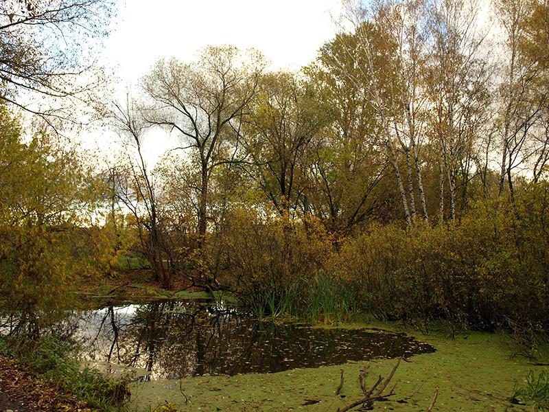 Облетевшие заросли над прудом.  Москва, Покровское-Стрешнево, осень 2012