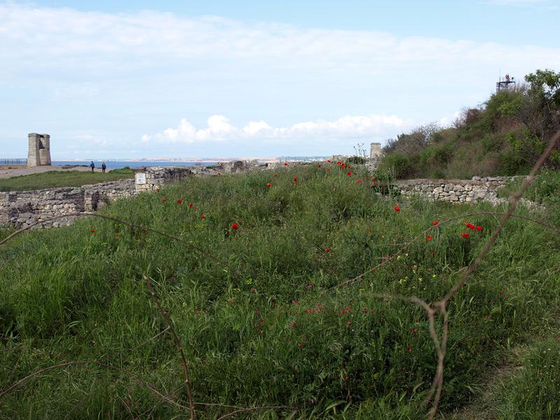 Маковые поляны. Херсонес, Крым, весна 2010