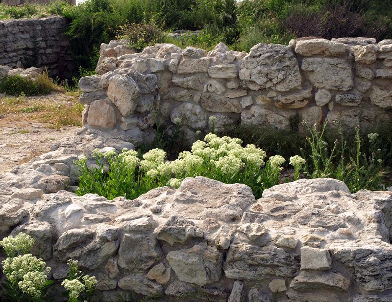 Кладка и цветы... Херсонес, Крым, весна 2010