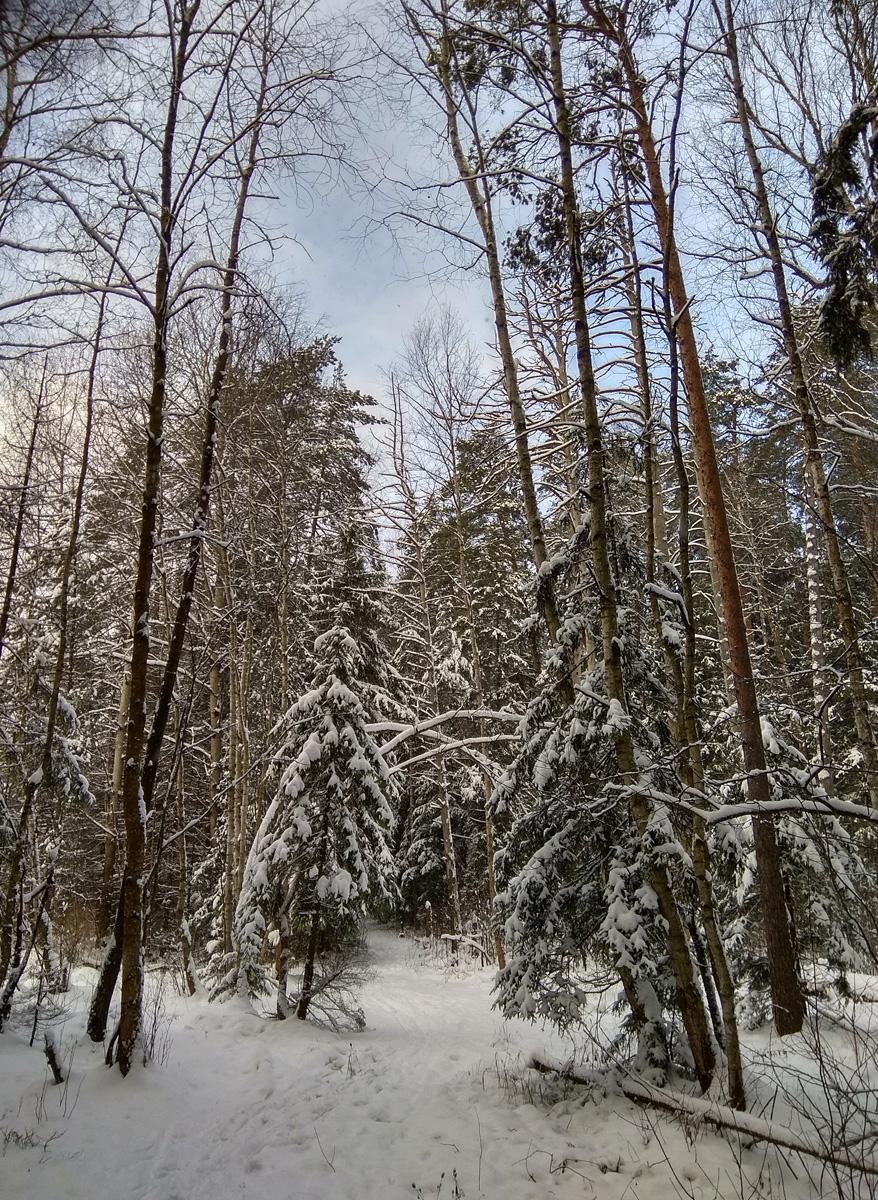 Нахабино, Подмосковье, зима 2017