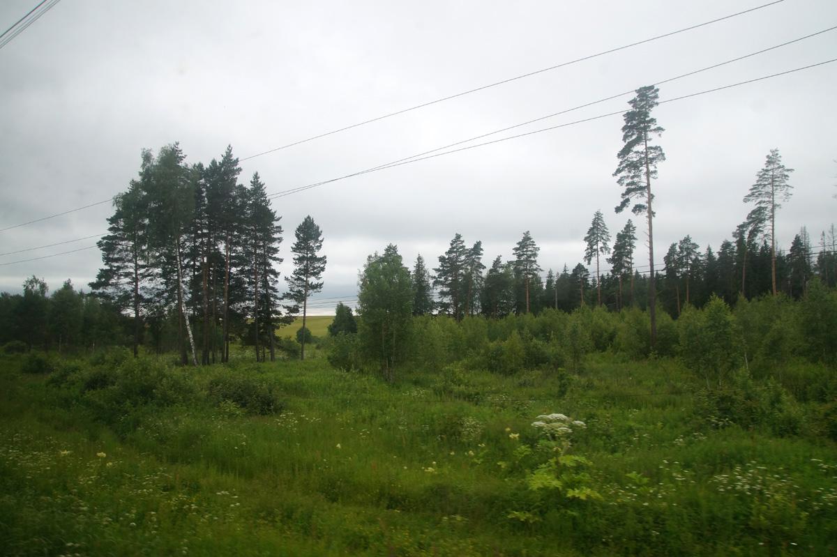 Подмосковье, лето 2017