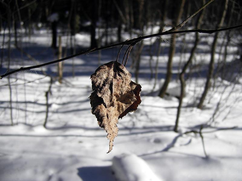 Воспоминания об осени Нахабино, зима 2007