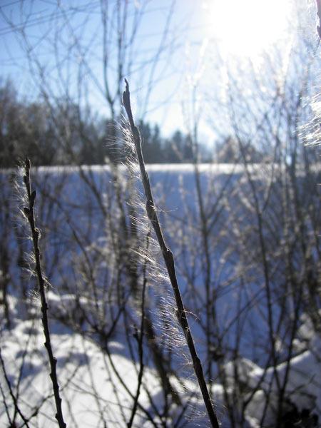 На ветру Нахабино, зима 2007