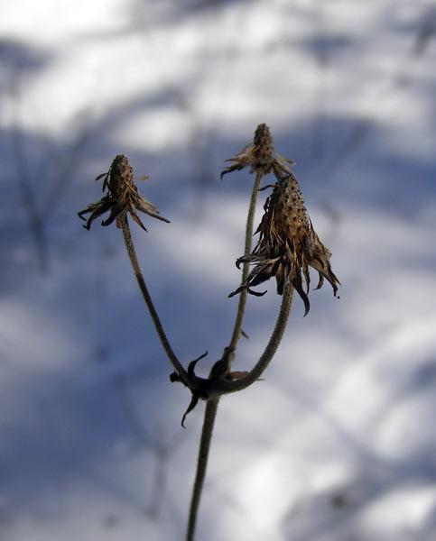 Сухое и мерзлое Нахабино, зима 2007