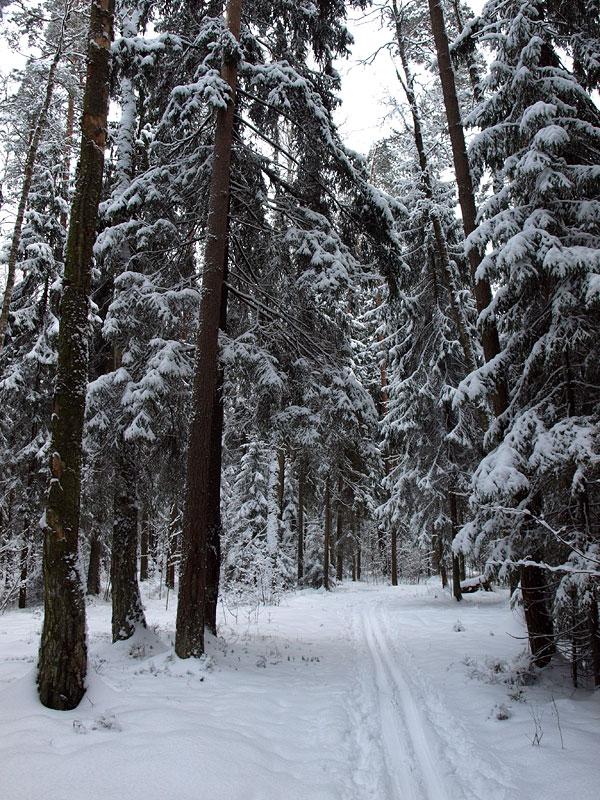 На лыжне. Черноголовка, зима 2009