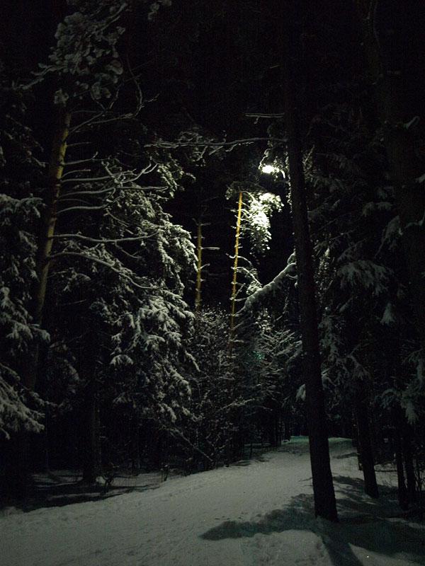Свет среди ветвей... Черноголовка, зима 2009
