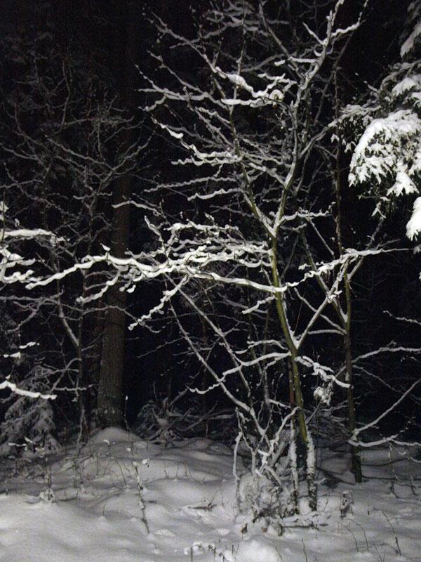 Гирлянды снега... Черноголовка, зима 2009
