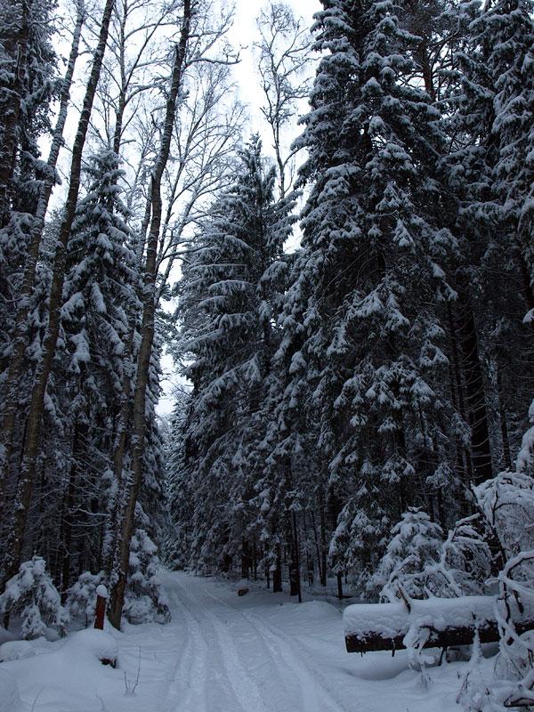 Лесная тропа... Черноголовка, зима 2009