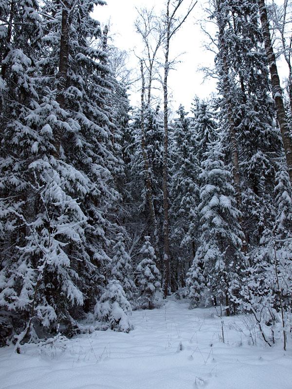 Поляны в снежном пуху... Черноголовка, зима 2009