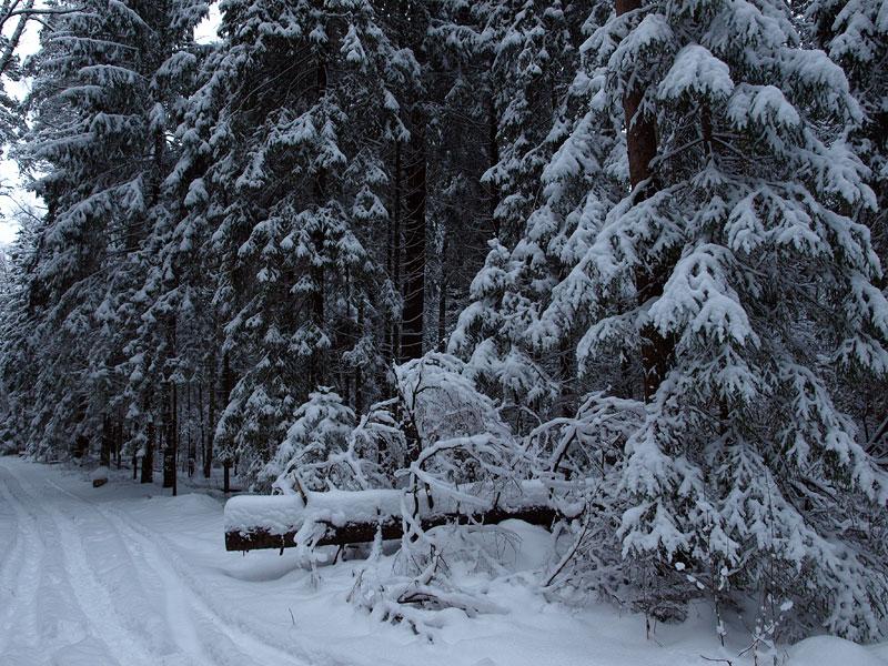 Бурелом на дороге. Черноголовка, зима 2009