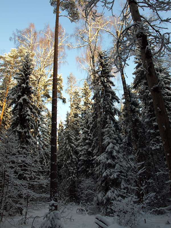 Солнце на вершинах... Черноголовка, зима 2009