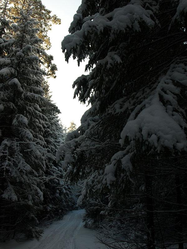 Силуэт елки... Черноголовка, зима 2009