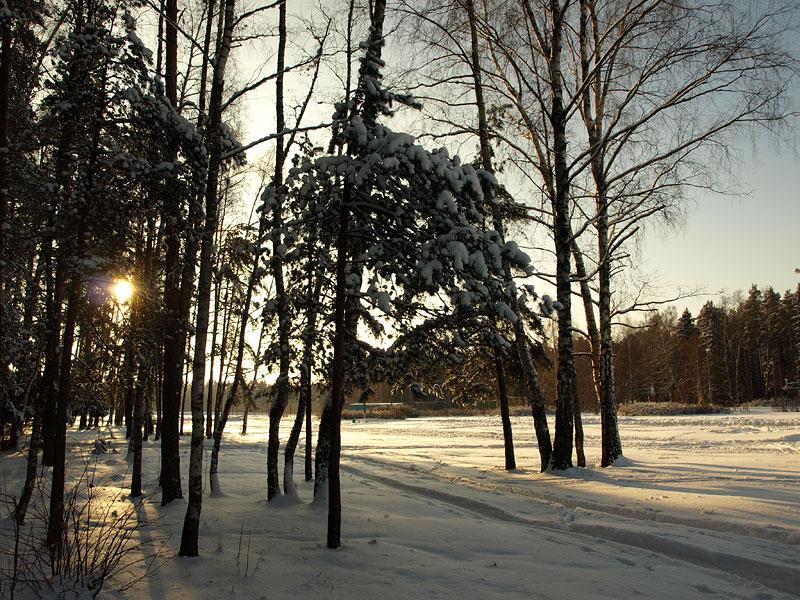 Низкое солнце... Черноголовка, зима 2009